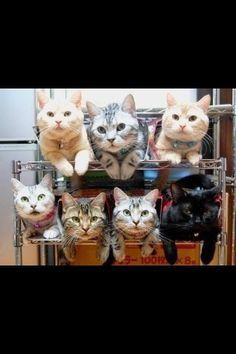 Shoe cats!