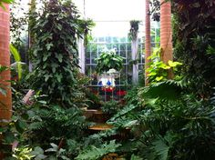 The U.S. Botanic Garden: A Place for All Seasons