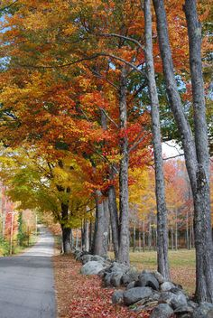 New Hampshire ---- Photo by Theresa Paolo