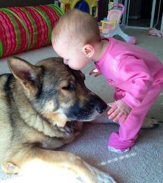 a kiss, funny pictures, pet, baby girls, german shepherds, friend, big dogs, sweet kisses, kid