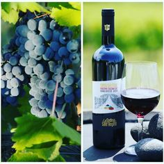 Sassidautore DOC Maremma Toscana. Only the best quality Sangiovese grapes, carefully selected for our wines