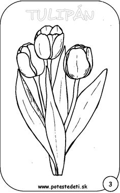tulipán Adult Coloring Book Pages, Flower Coloring Pages, Colouring Pages, Coloring Books, Spring Art, Spring Crafts, Outline Images, Shadow Silhouette, Drawing Projects