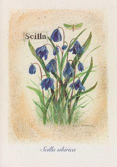 Leena Airikkala   Flickr - Photo Sharing! Botanical Illustration, Flower Prints, Blue Flowers, Plants, Heaven, Illustrations, Google, Old Books, Fruit And Veg