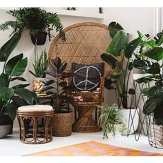 We are proud to introduce new member @olivegreenplantandprop to @absoluteweddings_magazine  The perfect crew to bring your indoor jungle to life!  #creativecrew #planthire #prophire #weddings #weddinghire #indoorjungle #geelong #geelongwedding #ballarat #daylesford #warrnambool #oceangrove #victoriaweddings #melbourne #melbourneweddings by absoluteweddings_magazine