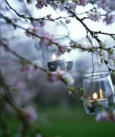 Candle jars and a tree of blooms.