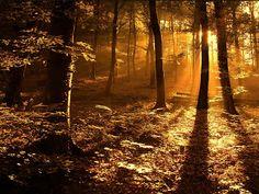 la luz que guía al sendero