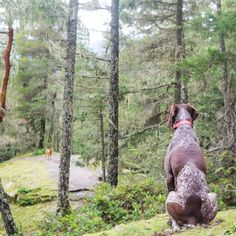 Get out with your dog. Spend time in nature. You both will feel better.
