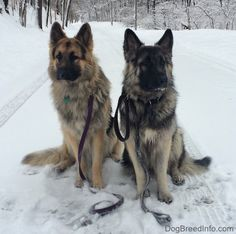 One Dog or Two, Should I get a second dog? Having 2 Dogs