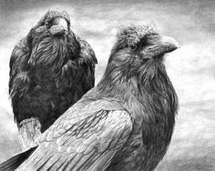 "Crows Ravens:  ""Huginn and Muninn,"" by Christopher Reach. Description from pinterest.com. I searched for this on bing.com/images"