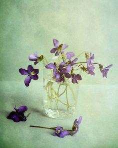 mint green violet purple flower photography / pretty aqua wall art / modern vintage decor / dreamy floral / romantic spring botanical print