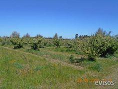 QUINTA 4HÁS EXTE. UBICACIÓN..EL COLORADO  4hás 0568m2 con montes frutales, frente a Ruta N ..  http://las-piedras-city.evisos.com.uy/quinta-4ha-s-exte-ubicacia-n-el-colorado-id-323383