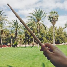 Drumstick under palm trees #drumstickeverywhere #drums #drummer #bateria #drumporn #percussion #vsco #vscocam #love #drumstuff #harrypotter #instagood #like4like #drumstagram #drumsticks #vf15 #sticks #baquetas #drummingco #dw #zildjian #pearl #vicfirth #vater #promark #ahead #meinl #photooftheday #palmtrees #underpalmtrees by drumstickeverywhere