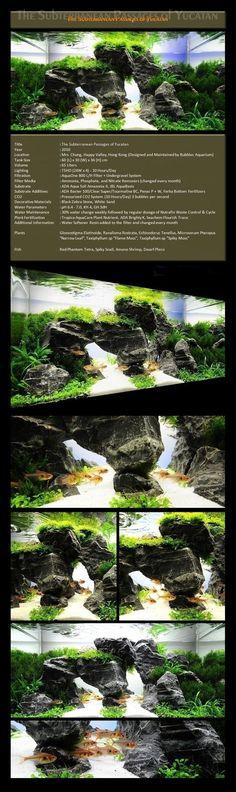 Bubbles Aquarium - Aquascapes (2009 Aquascaping Gallery) Nature Aquarium, Home Aquarium, Aquarium Design, Planted Aquarium, Aquarium Fish, Aquascaping, Amazing Aquariums, Fish Care, Tanked Aquariums