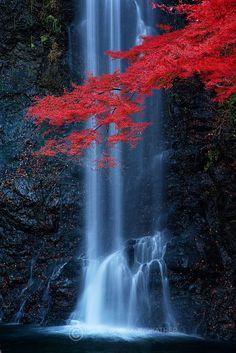 Maple Falls - classic autumn scene from Minoo waterfall, just outside Osaka, Japan // Pete Wongkongkathep Beautiful World, Beautiful Places, Beautiful Pictures, Amazing Places, Beautiful Waterfalls, Beautiful Landscapes, Natural Waterfalls, Famous Waterfalls, Landscape Photography