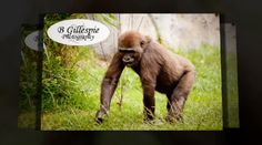 'A Day At The Zoo by B Gillespie Photography' - created with Animoto. Click to watch the video!