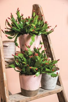 Spring Pots PTMD #spring #potten #lente #interior