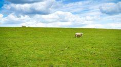Sheep-field - null