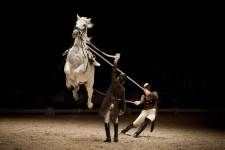 Spanish Riding School performs in Amsterdam