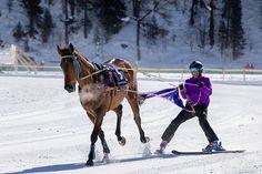 CHEVAUX COURSES HIPPIQUES PARI PMU ARGENT FACILE GAGNER ARGENT PRONOSTICS Courses Hippiques, Location Chalet, Ski, Equestrian, Horses, Photography, Animals, Voici, Passion
