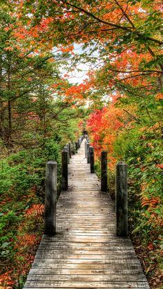 Autumn wooden path source Flickr.com