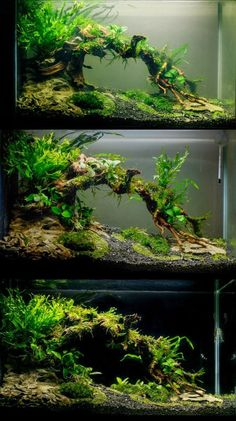 Planted Tank ideas for your aquarium, called Aquascaping for. Planted Tank ideas for your aquarium, called Aquascaping for those of you who don't know. Take your fish tank to the next level. Planted Aquarium, Best Aquarium Fish, Aquarium Terrarium, Fish Tank Terrarium, Water Terrarium, Aquarium Aquascape, Jellyfish Aquarium, Betta Aquarium, Nature Aquarium