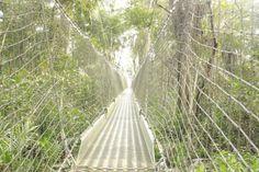 The Longest Canopy Walk Way in Africa