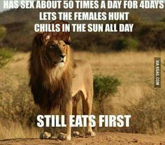 Best Funny Pictures, Funny Animals, Chill, Lion, Creatures, Humor, Pets, Anime, April 14