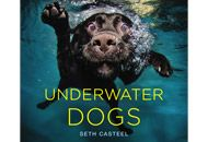 Underwater Dogs By Seth Casteel - Book Finder - Oprah.com