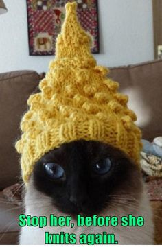 Stop her, before she knits again. - LOLcats is the best place to find and submit funny cat memes and other silly cat materials to share with the world. We find the funny cats that make you LOL so that you don't have to. Funny Cute, Farts Funny, Funny Humor, Funny Animal Pictures, Funny Animals, Cute Animals, Hilarious Pictures, Funny Photos, Funny Cats