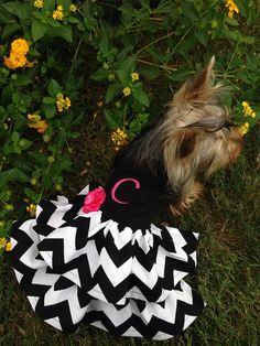 Custom monogrammed dog dress halter style  by Rufflesforcharli, $32.00