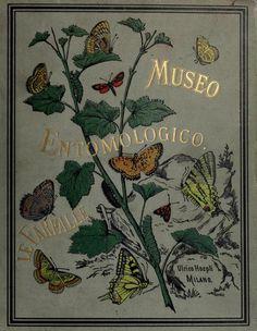 heaveninawildflower:  Cover of 'Museo Entomologico. Le Farfalle' (1885) by Ferdinando Sordello. Published by Ulrico Hoepli, Milan. Universit...