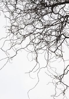 branches tree autumn nature abstract Black & White #abstractphotography