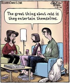 Home of Bizarro by Dan Piraro, a single-panel comic strip making people laugh for over 30 years. Bizarro Comic, Funny Animal Images, Funny Animals, Funny Pictures, Animal Jokes, Animals Images, Funny Cartoons, Funny Comics, Funny Memes