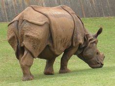 Rhinoceros Farming in China