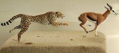 Cheetah & Springbok 1:22 scale - made by Harriet Knibbs Sculptures Ltd