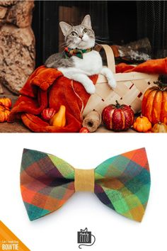 Thanksgiving Greeting Card Thanksgiving Dog Puppy Bow Corgi Sweaters Leaves