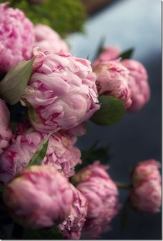 peonies and polaroids