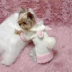 Yorkshire Terrier, Yorkie, Teddy Bear, Pets, Animals, Yorkshire Terriers, Yorkies, Animales, Animaux
