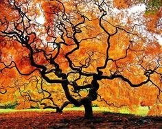I like to paint trees. This looks like the next tree I will paint. I love the squiggly branches.