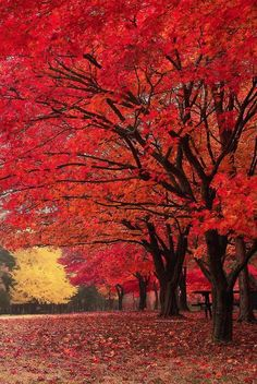 """""""Red Fall"""" by Tony Lee on 500px - Nami Island in South Korea"""