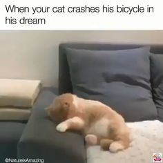 funny cats and dogs ; funny cats can't stop laughing ; funny cats and dogs videos ; funny cats with captions Funny Animal Memes, Cute Funny Animals, Funny Animal Pictures, Cute Baby Animals, Cat Memes Hilarious, Funny Best Friend Memes, Cute Cat Memes, Funny Cute Cats, Zoo Animals