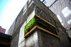 Wayward plants - moss wall