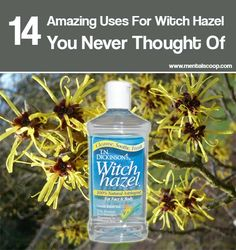 14 Amazing Uses For Witch Hazel You Never Thought Of Summer is a great season to enjoy outdoor activities, be they grilling out with family…