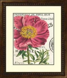 Peony Botany by Sue Schlabach Framed Graphic Art