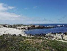 Monterey on osa 17-Mile-Driveä, joka on Kalifornian upea maisemareitti. Montereystä pääsee myös mahtaville valassafareille katsomaan delfiinejä ja valaita! // Monterey is part of the 17-Mile-Drive scenic route in California. You can also go for an amazing whale watching trip in Monterey to see dolphins and whales! Whale Watching, Clint Eastwood, San Francisco, California, Mountains, Usa, Lifestyle, Water, Travel