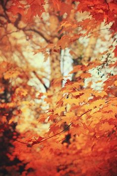 The reds and oranges of the autumn leaves, beautiful!