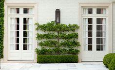 Espaliered pear tree on garden terrace by Howard Design Studio