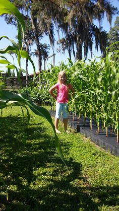 Jenna's corn