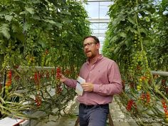 Paul Faulkner from Eric Wall Ltd gave the National Vegetable Society Members an interesting and informative tour of the glasshouses at Eric…