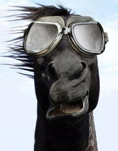 Crazy horse with a smile and shades! Horse humor.